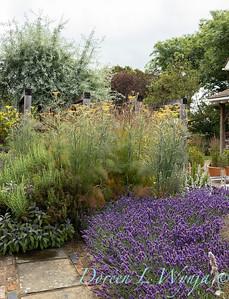 Beechleigh Garden - Jacky O'Leary garden designer_2979
