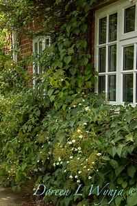 Beechleigh Garden - Jacky O'Leary garden designer_2996