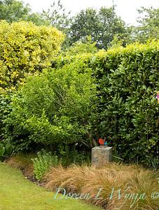 Beechleigh Garden - Jacky O'Leary garden designer_2992