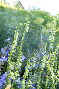 Pettifer's Garden - Virginia Price designer_1005
