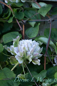 Pettifer's Garden - Virginia Price designer_1046