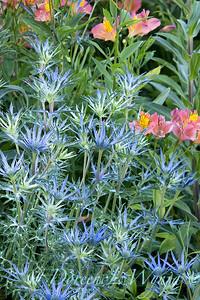 Pettifer's Garden - Virginia Price designer_1014