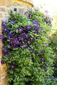 Pettifer's Garden - Virginia Price designer_1000