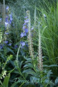 Pettifer's Garden - Virginia Price designer_1009