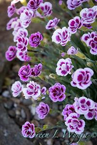 Pettifer's Garden - Virginia Price designer_1043