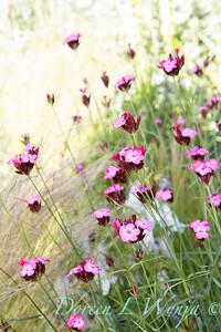 Pettifer's Garden - Virginia Price designer_1021