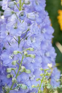 Pettifer's Garden - Virginia Price designer_1029
