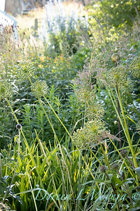 Pettifer's Garden - Virginia Price designer_1034