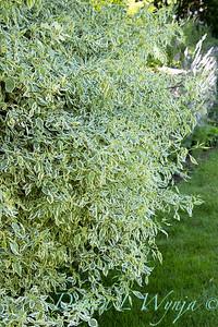 Pettifer's Garden - Virginia Price designer_1004