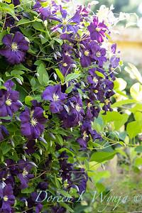 Pettifer's Garden - Virginia Price designer_1002