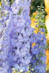 Pettifer's Garden - Virginia Price designer_1028