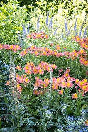 Pettifer's Garden - Virginia Price designer_1012
