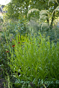 Pettifer's Garden - Virginia Price designer_1035