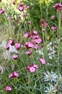 Pettifer's Garden - Virginia Price designer_1019