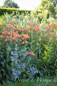Pettifer's Garden - Virginia Price designer_1013