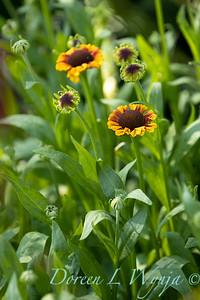 Pettifer's Garden - Virginia Price designer_1033