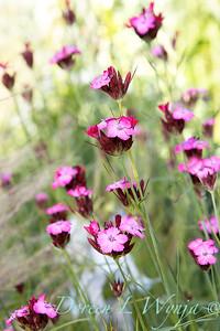 Pettifer's Garden - Virginia Price designer_1020