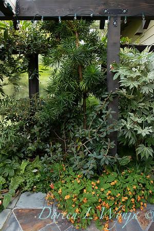 Begonia sutherlandii_2004
