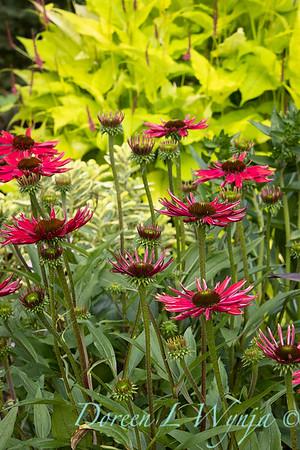 July in the garden_5515