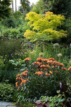 July in the garden_5509