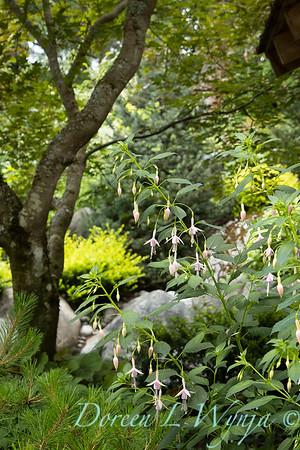 July in the garden_5532