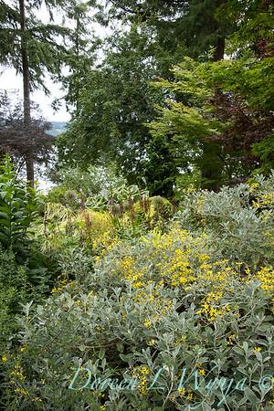 July in the garden_5522