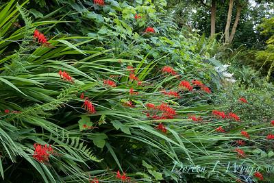 July in the garden_5501