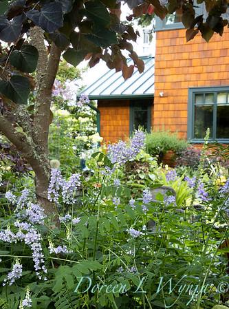 July in the garden_5505
