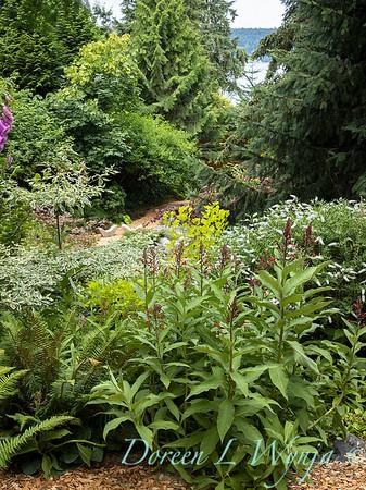 July in the garden_5535