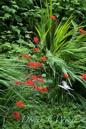 July in the garden_5502
