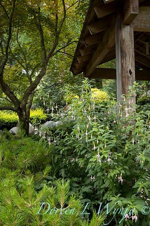 July in the garden_5531