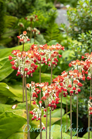 July in the garden_5529