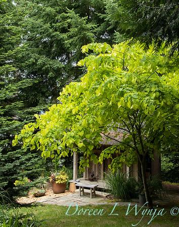 July in the garden_5526