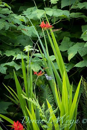 July in the garden_5504