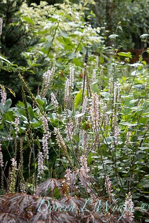 July in the garden_5538