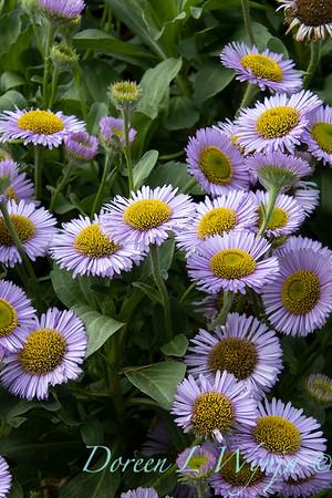 July in the garden_5516