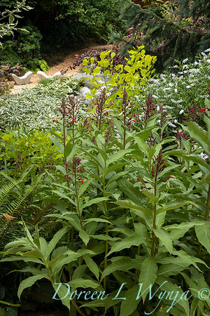 July in the garden_5536