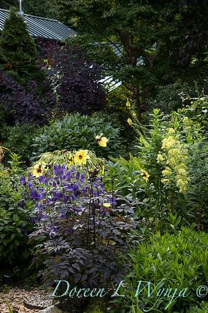 July in the garden_5512