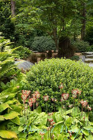 July in the garden_5527