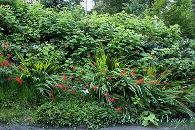 July in the garden_5500