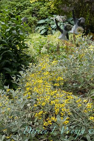 July in the garden_5523
