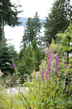 June in the garden_3008