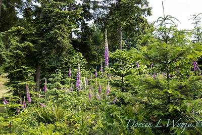 June in the garden_3003