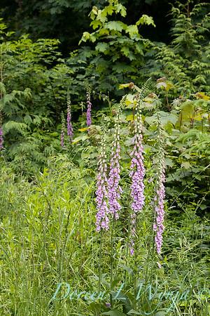 June in the garden_3021