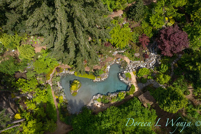 Drone shots over the pond_7099