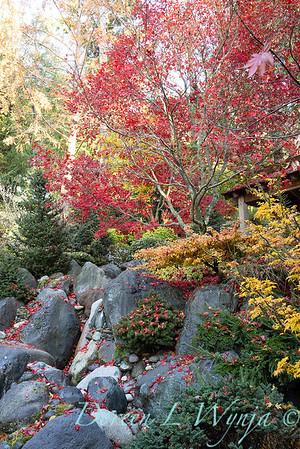 Finally fall color_8310