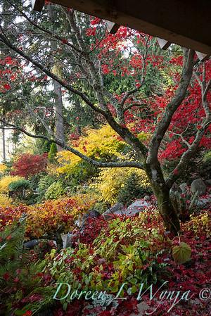 Finally fall color_8316