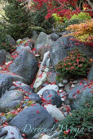 Finally fall color_8309