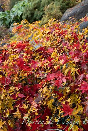 Finally fall color_8321