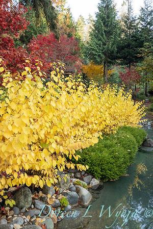 Finally fall color_8300